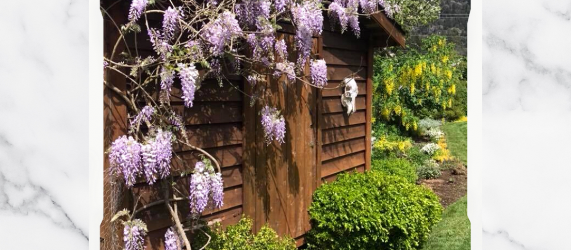 Live Simple Solutions-Wisteria